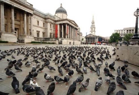 traflagar-square-pigeons